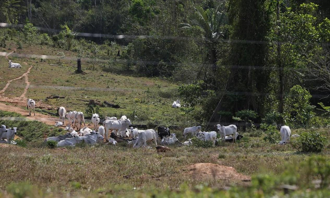 A Reserva Extrativista (Resex) está sedo desmatada e dando lugar ao pasto e criação de gado. A reserva tem 970.570 hectares, o equivalente a 970 campos de futebol - 27/08/2019 Foto: Jorge William / Agência O Globo