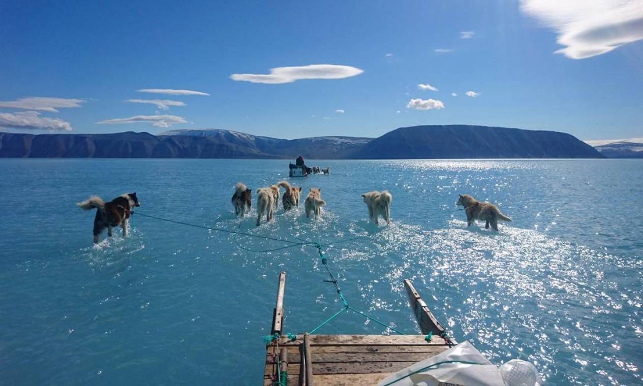 Imagem fotografada por Steffen Olsen, do Centro de Oceano e Gelo do Instituto Meteorolítico Dinamarquês, mostra cães de trenó andando pela água parada no gelo do mar durante uma expedição no noroeste da Groenlândia. Relatório da ONU sobre oceanos e mudanças climáticas destaca efeitos que China, Estados Unidos, União Europeia e Índia enfrentarão Foto: STEFFEN OLSEN / AFP