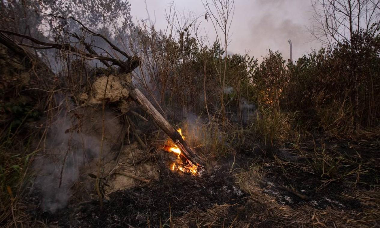 De acordo com informações da Associação de Defesa Etnoambiental Kanindé, no parque de Pacaás Novos e na terra Uru-Wau-Wau a invasão começou no fim de outubro, logo após as eleições e se agravaram em janeiro - 29/08/2019 Foto: Gabriel Monteiro / Agência O Globo