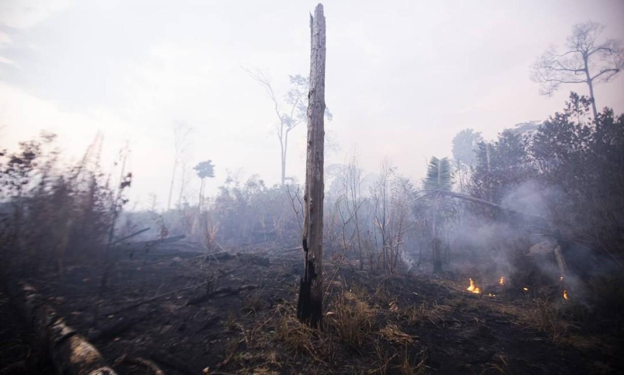 No período de 1º de janeiro a 28 de agosto, Rondônia teve um aumento de 164% no número de focos de incêndio em relação ao mesmo período de 2018 - 29/08/2019 Foto: Gabriel Monteiro / Agência O Globo