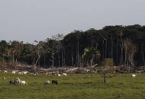 Gado e desmatamento em uma fazenda no município de Tarauacá, no Acre, terra natal do ambientalista Chico Mendes: dados indicam que o estado está se transformando na mais nova fronteira de ocupação da Amazônia Foto: Jorge William / Agência O Globo