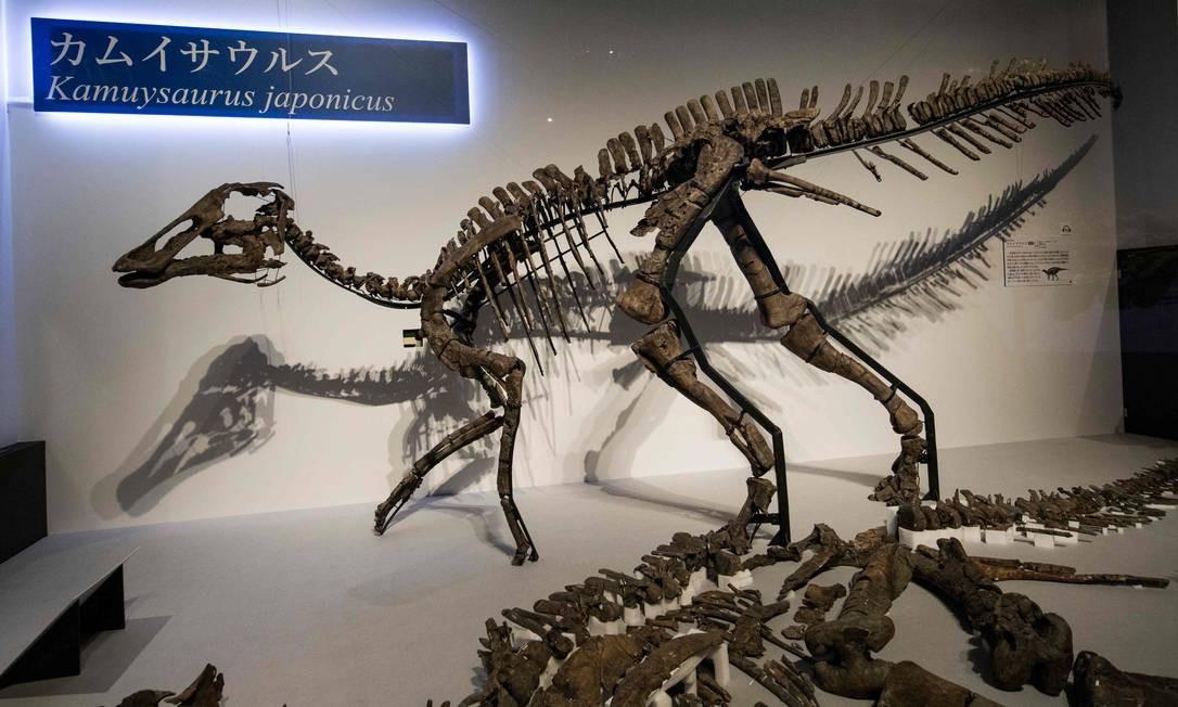 Esqueleto de kamuysaurus japonicus, ou 'deus dragão japonês', foi apresentado no Museu de História Natural e Ciências de Tóquio Foto: BEHROUZ MEHRI / AFP