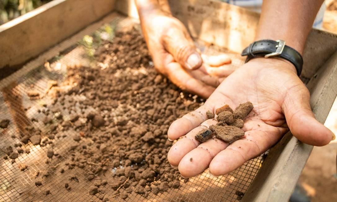 Coleta de carvões e pequenos fragmentos de material arqueológico. Muitos dos elementos encontrados são considerados inéditos dentro da região do Médio Solimões Foto: Bernardo Oliveira /