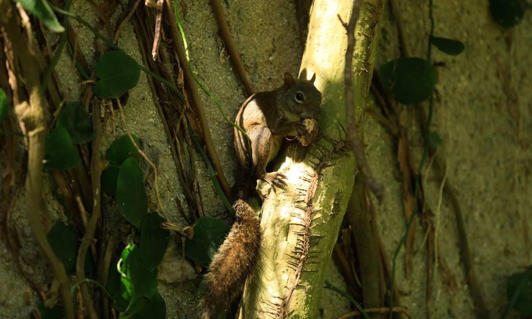 Burle Marx introduziu o uso de espécies nativas brasileiras em seus projetos paisagísticos Foto: Brenno Carvalho / Agência O Globo