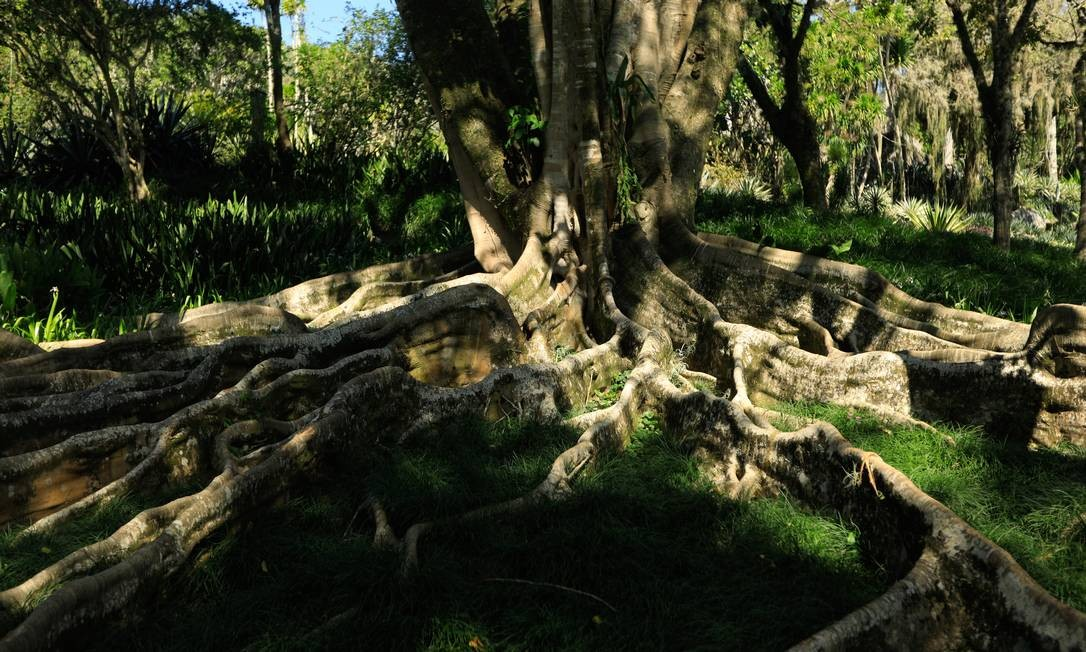 Sítio foi adquirido pelo paisigista brasileiro em 1949 e doado pelo artista ao Iphan, em 1985 Foto: Brenno Carvalho / Agência O Globo