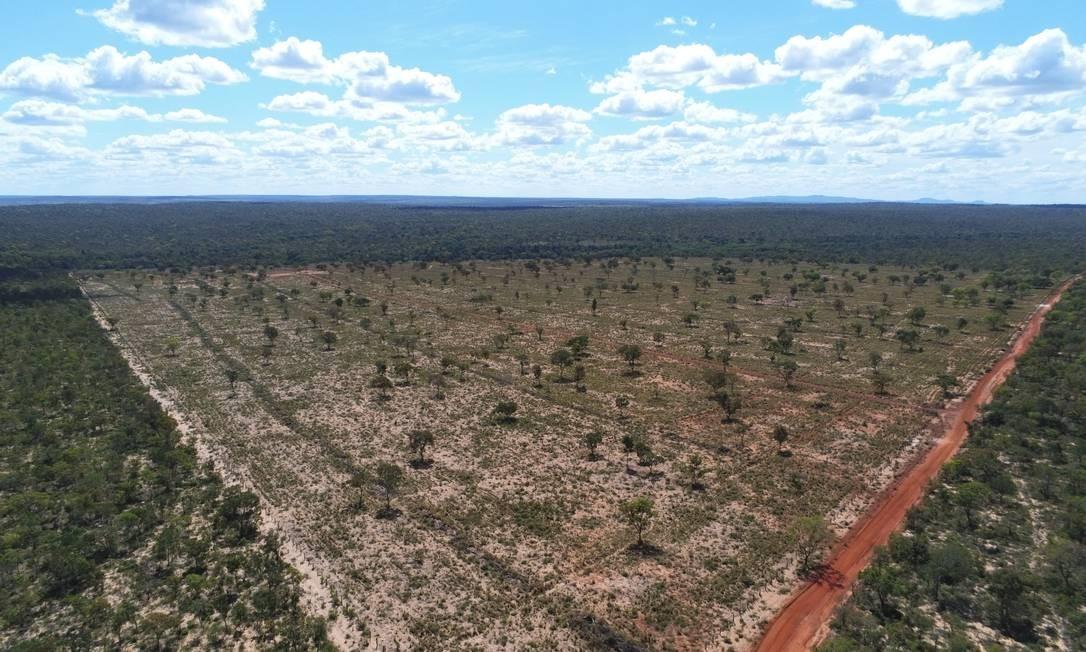 Desmatamento no Cerrado atingiu 3.931 km² até agosto deste ano, 10,4% a menos do que no mesmo período do ano passado Foto: Lapig/UFG