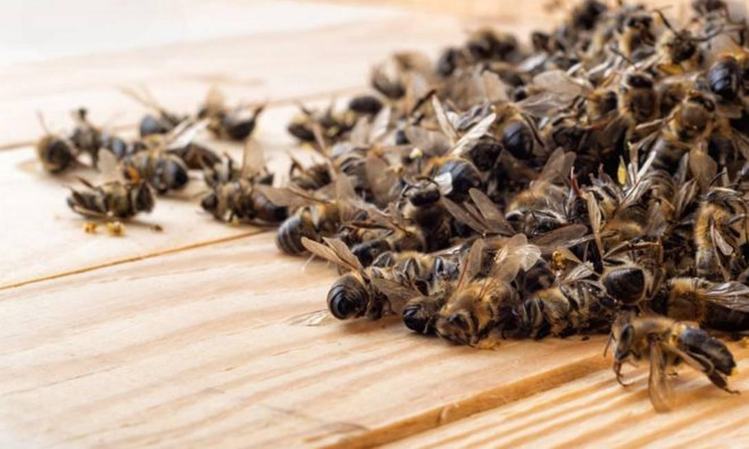 Neste ano foram registradas mortes de abelhas causadas por agrotóxicos em Santa Catarina, Rio Grande do Sul, Mato Grosso do Sul e São Paulo Foto: Getty
