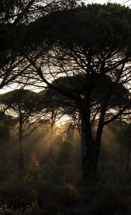 Os bosques são outro cenário constante nos arredores de Melides, no Alentejo Foto: Daniel Rodrigues / The New York Times