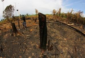 Área desmatada e queimada para plantar madioca, na zona rural da cidade de Lábrea, no interior do Amazonas Foto: Código 19 / Agência O Globo