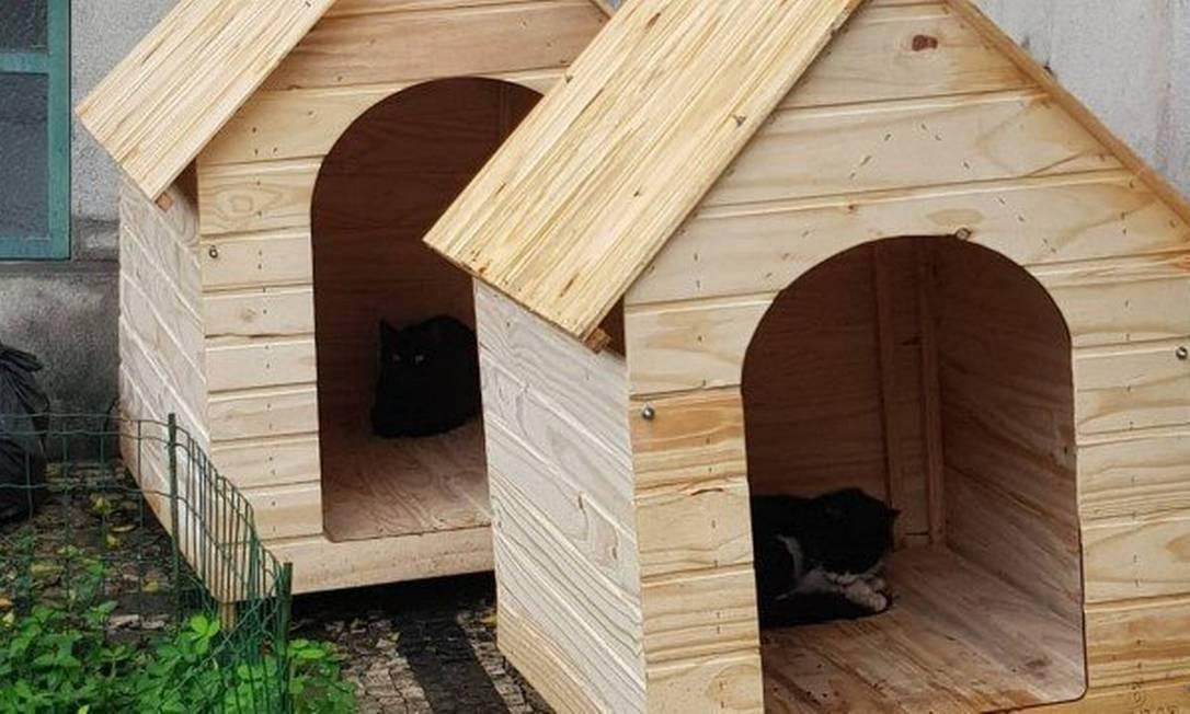 Luta por permanência das casas de gatos no Campo de Santana gera comoção nas redes sociais Foto: Agência O Globo