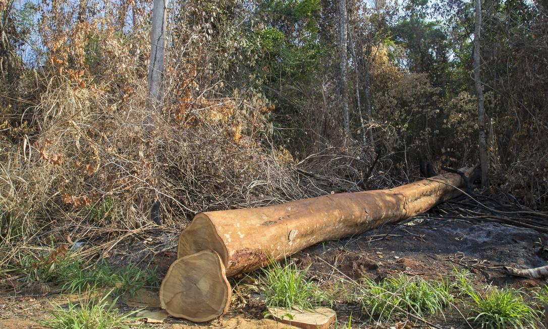Desmatamento: queimadas em Altamira, no estado do Pará Foto: Edilson Dantas / Agência O Globo