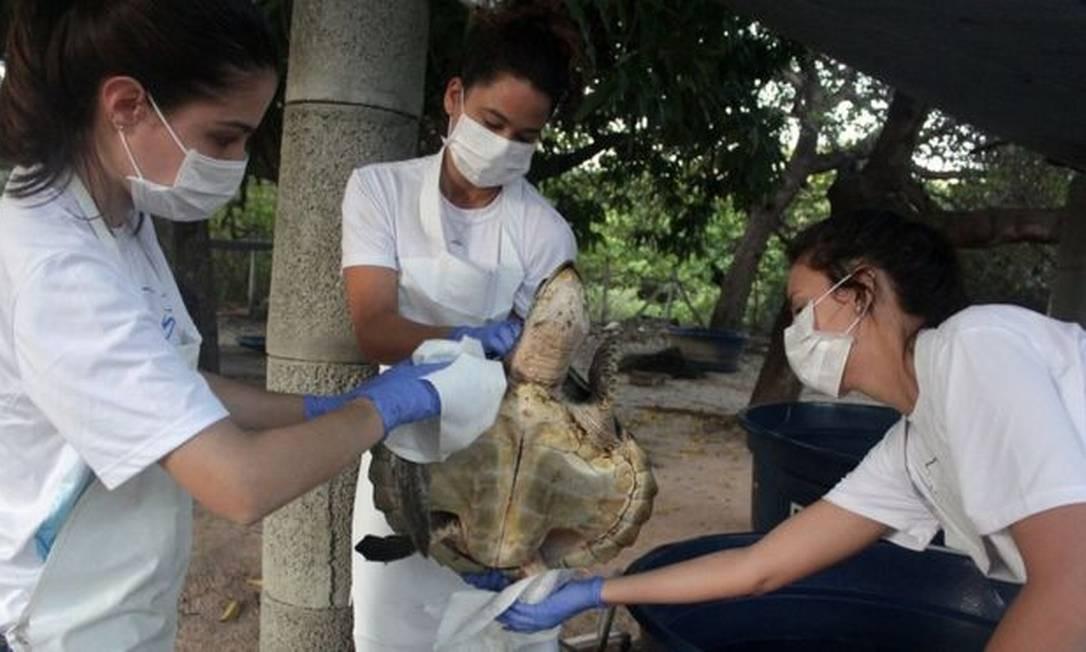 Tartaruga recebe cuidados no Centro de Reabilitação de Mamíferos Marinhos do Aquasis (CRMM) na cidade de Caucaia, no Ceará Foto: AFP