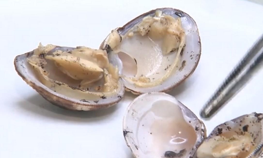UFBA analisou ostras e outros animais marinhos contaminados pelo óleo Foto: Reprodução TV Globo