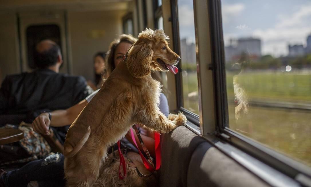 Cachorrinho acompanha sua dona numa viagem de trem entre Curitiba e Morretes, no litoral do Paraná no novo vagão 'pet friendly' da Serra Verde Express Foto: Brunno Covello / Divulgação