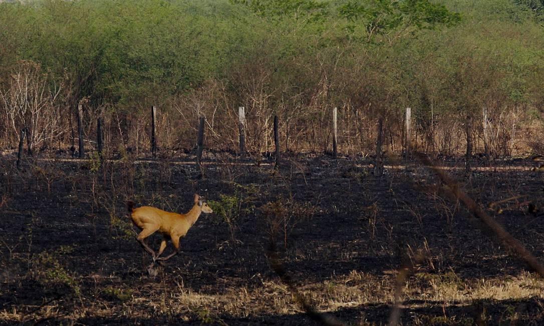 Número de queimadas em 2019 representa salto de 462% em relação ao mesmo período de 2018, quando foram registradas 1.507 queimadas , número mais baixo desde 2014 Foto: Chico Ribeiro / Governo do Estado do MS