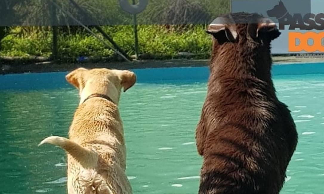Cães em treinamento: adestradores ensinam técnica gratuitamente, aos sábados Foto: Divulgação/Park Clube do Totó