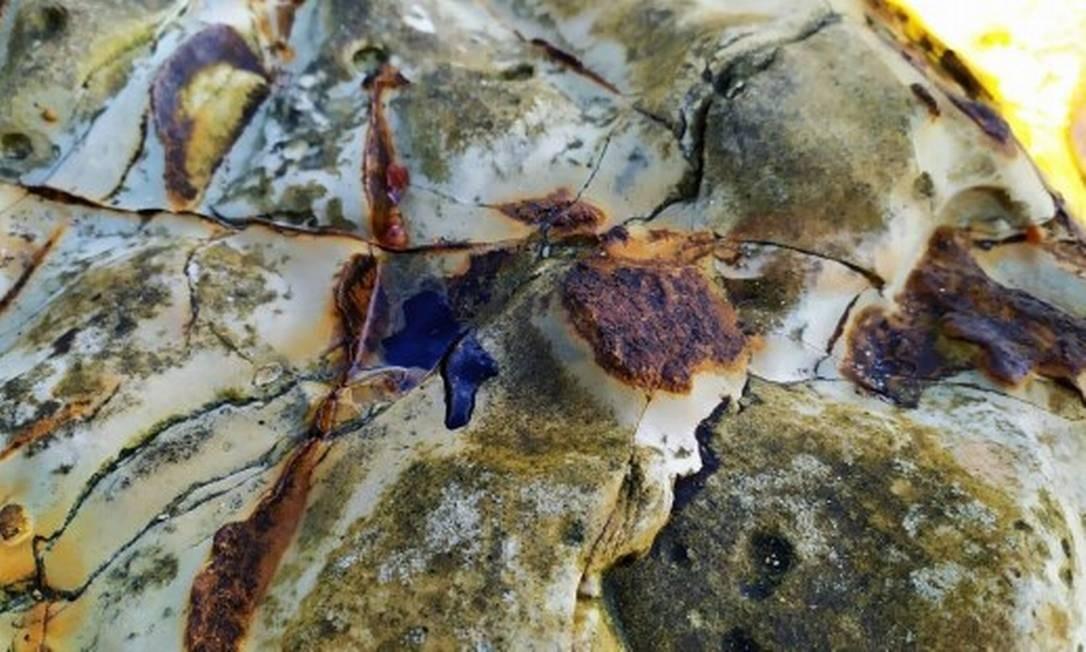 SOC - vestígios de óleo encontrados em Abrolhos Foto: Divulgação/Marinha do Brasil / Divulgação/Marinha do Brasil