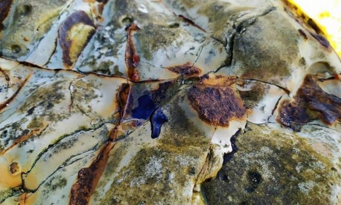 Fragmento de óleo na Ilha de Santa Bárbara, em Abrolhos Foto: Divulgação/Grupo de Acompanhamento e Avaliação