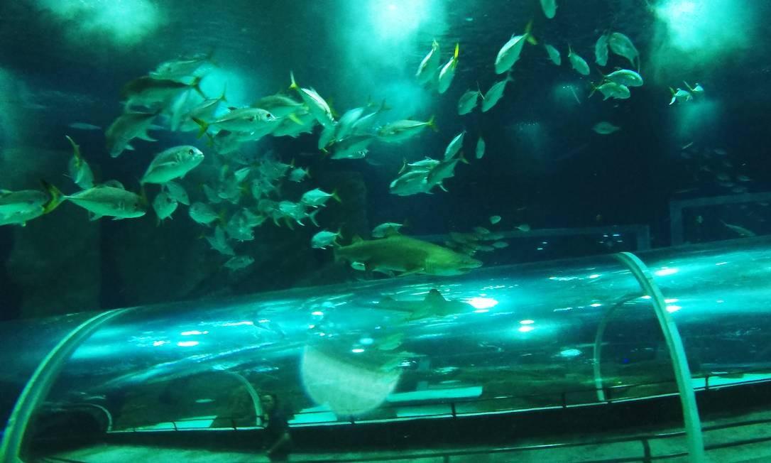 Visitantes podem observar mais de 5 mil animais marinhos vivendo em 28 tanques Foto: Antonio Scorza / Agência O Globo
