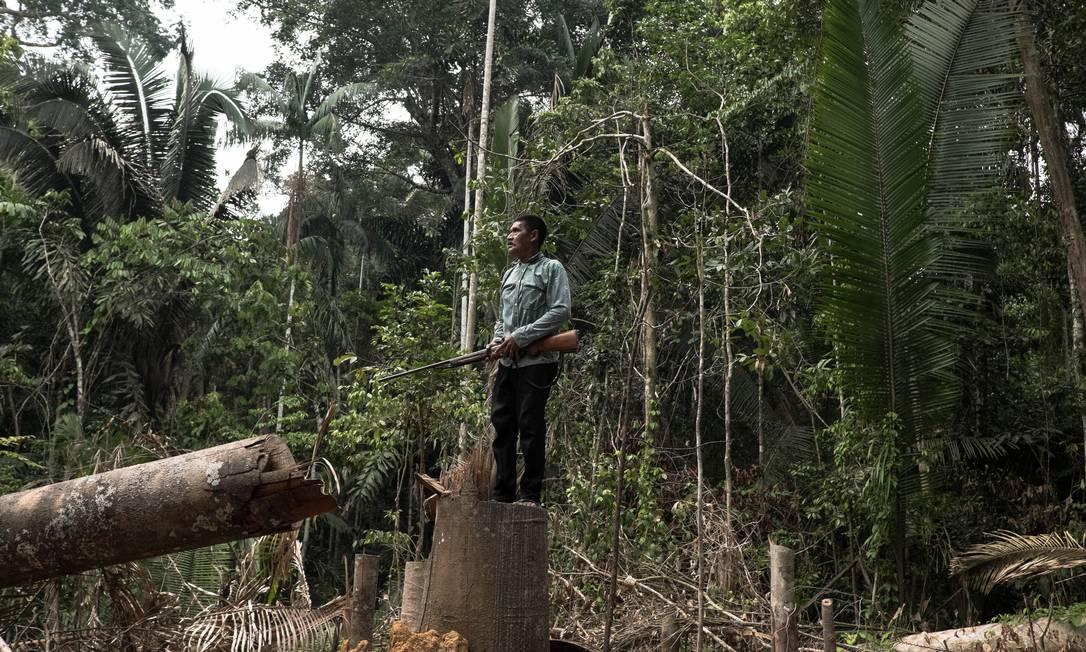 Indígena posa em pé em um tronco cortado dentro de uma unidade de conservação; ratificado em 1998, o Território Indígena de Karipuna (IT) tem 152.930 ha de tamanho e sofre constantes invasões de madeireiros ilegais Foto: Tommaso Protti/30-4-2019