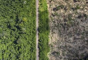 Floresta queimada em área de desmatamento no Oeste do Pará Foto: Marizilda Crupp/Divulgação / Agência O Globo