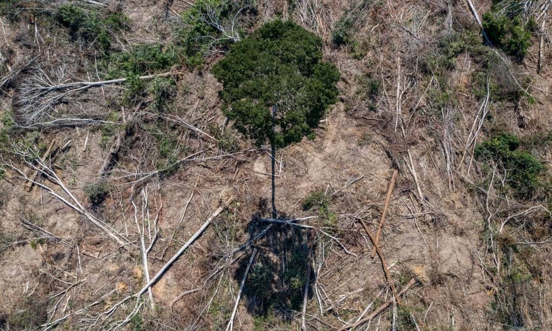 Floresta queimada no Pará: estado foi o que registrou maior índice de devastação, segundo o Prodes Foto: arizilda Crupp