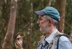 O ornitólogo Mario Cohn-Haft observa pássaro capturado em expedição na Serra da Mocidade, em Roraima, em 2016 Foto: Marcos Amend / Divulgação