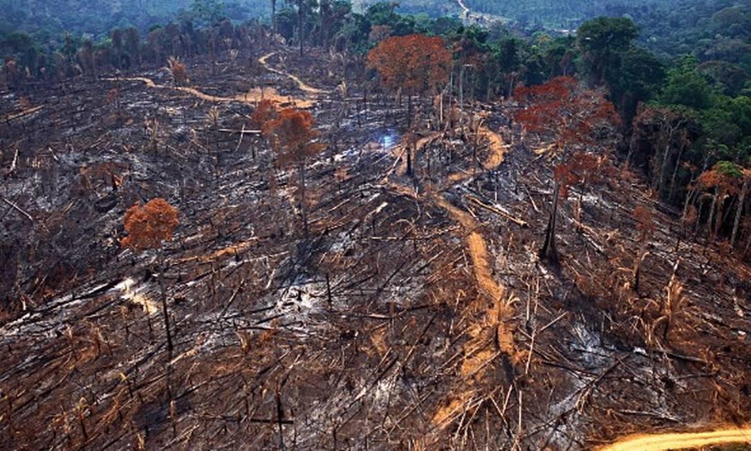 Pesquisa do Imazon mostra que desmatamento foi maior entre municípios na área de influência da usina Belo Monte Foto: Divulgação/Imazon/Araquem Alcântara