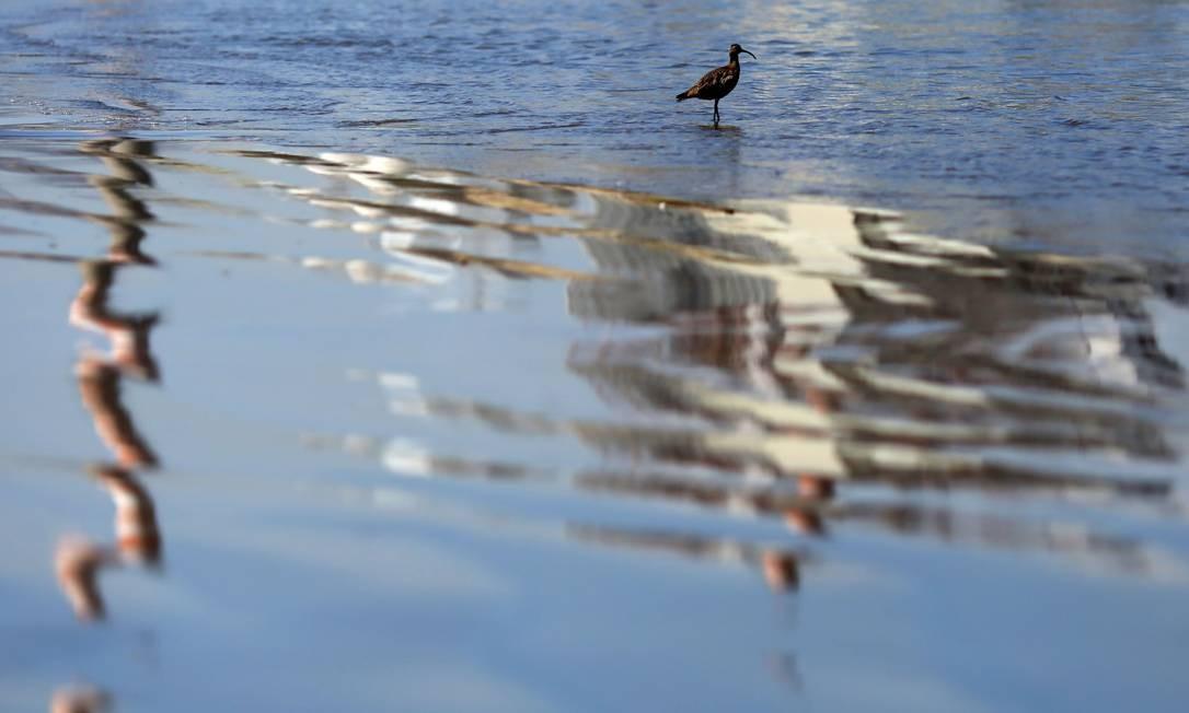 Um pássaro à beira-mar é vista sobre reflexo nas águas das chaminés da usina termelétrica AES Gener, na praia de Las Ventanas Foto: PABLO VERA / AFP