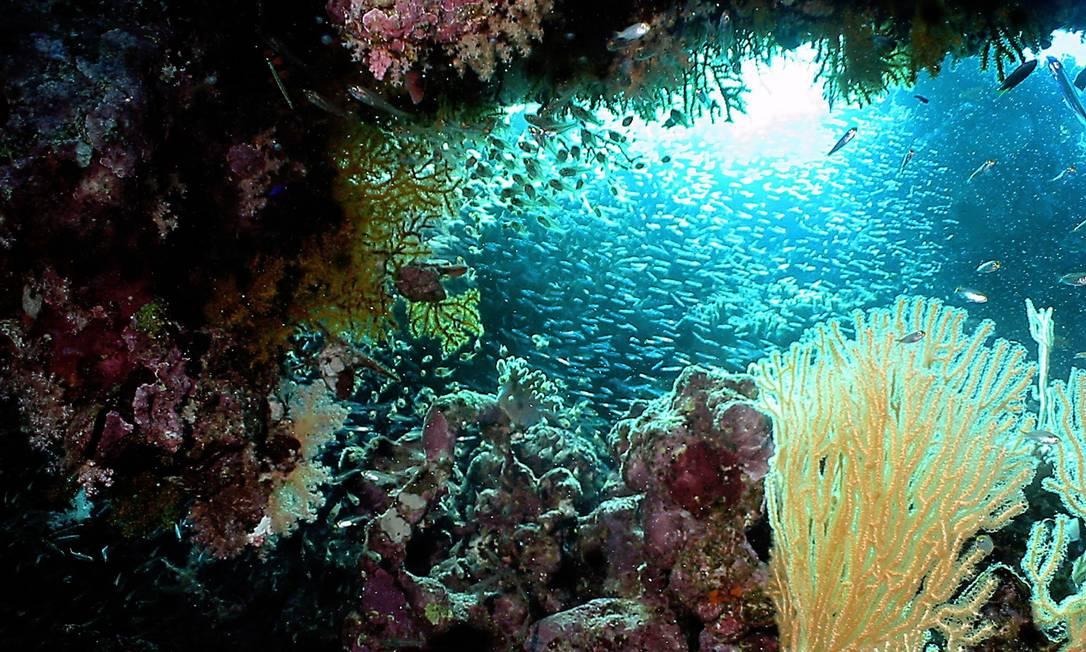 Corais no mar Mediterrâneo, que integram a Lista Vermelha da União Internacional para a Conservação da Natureza (UICN) Foto: Tarik Tinazay / AFP
