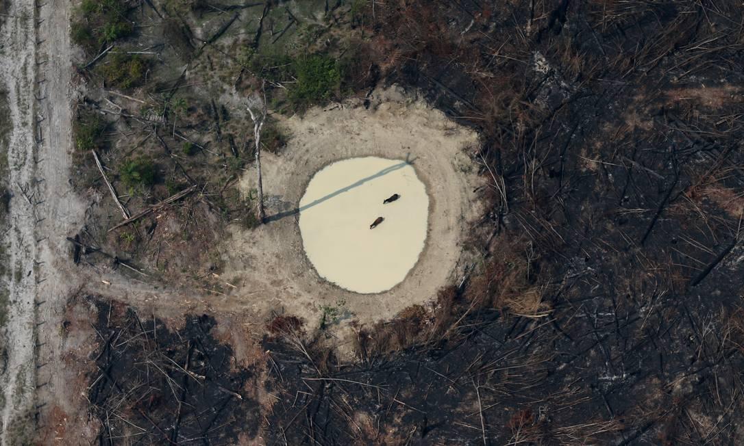 Restos de árvores queimadas em área próxima a Porto Velho, Rondônia. Foto: Ricardo Moraes / REUTERS
