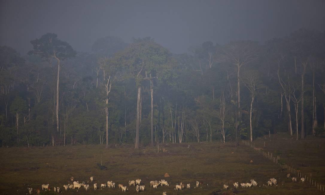 Gado pasta ao lado da floresta Amazônica, no Acre Foto: Dado Galdieri / Dado Galdieri/Bloomberg