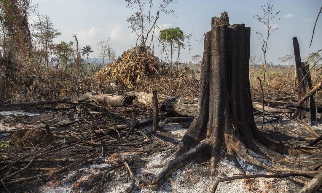 Fronteira do desmatamento na Amazônia avançou entre 2018 e 2019, afirma  estudo - Jornal O Globo
