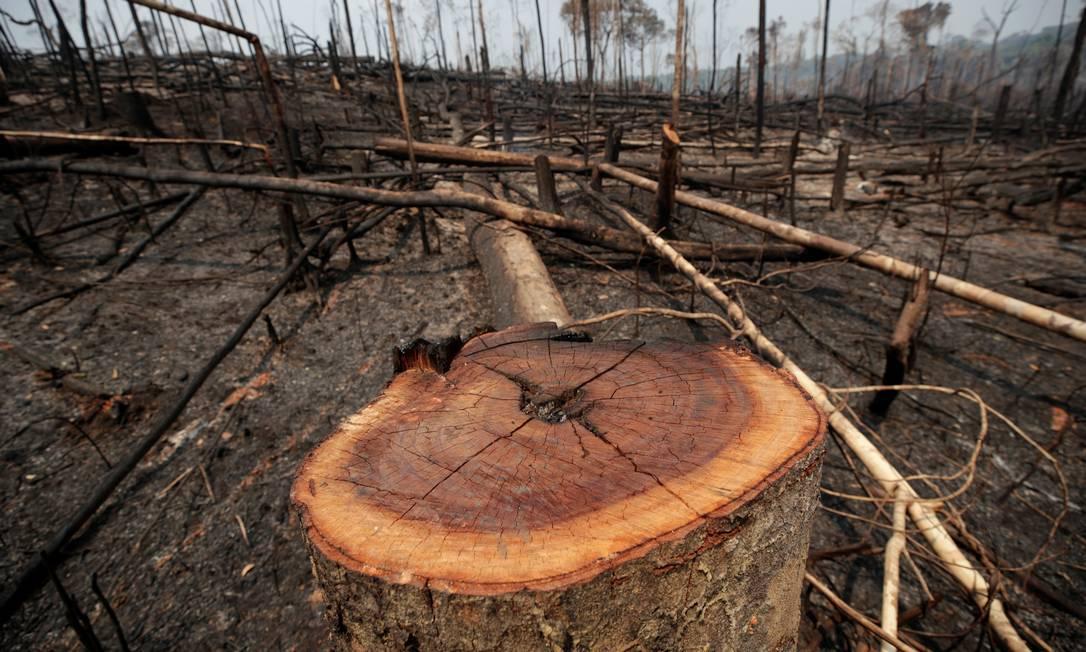 Floresta devastada por grileiros em Porto Velho (RO) Foto: UESLEI MARCELINO / Reuters