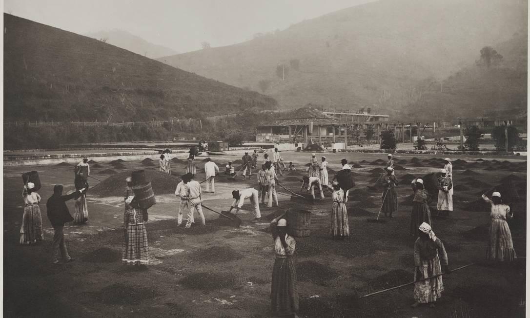 Foto de 1880 registra o trabalho escravo em fazenda de café do Vale do Paraíba Foto: Marc Ferrez / Divulgação