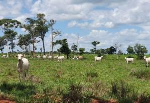 Gado no Norte do Mato Grosso Foto: Ana Lucia Azevedo / Agência O Globo