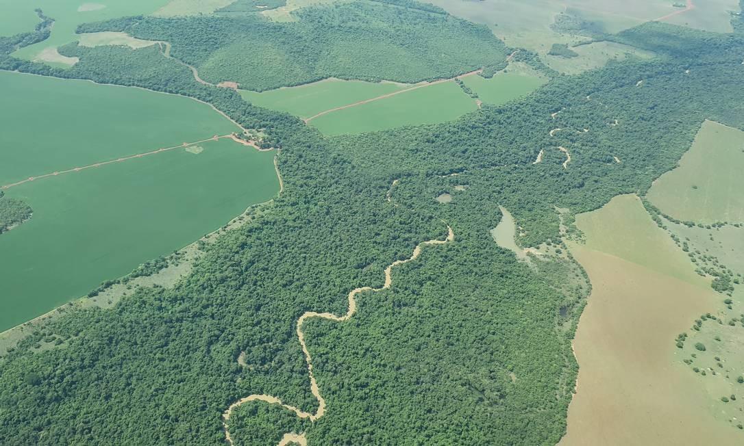 Ilhas de mata num mar de soja: vista do alto, a região das cabeceiras do Xingu, no Mato Grosso, é o império da soja. O que sobrou da Amazônia ali está em ilhotas de mata, quase todas APPs e reservas legais Foto: Ana Lucia Azevedo / Agência O Globo