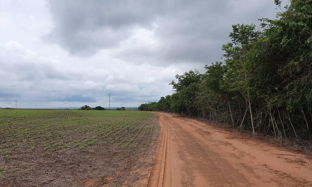 Ilhas de mata: uma estrada rural separa as vastas plantações de soja de remanescentes de Amazônia na região da Cabeça do Xingu, no Mato Grosso Foto: Ana Lucia Azevedo / Agência O Globo