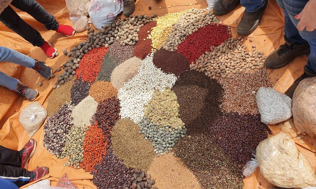Um arco-íris de biodiversidade: uma muvuca, nome escolhido para a técnica que combina sementes nativas com as de plantas usadas como adubação verde. A Rede de Sementes do Xingu trabalha com até 220 espécies de sementes entre nativas e aquelas usadas como adubo verde Foto: Ana Lucia Azevedo / Agência O Globo