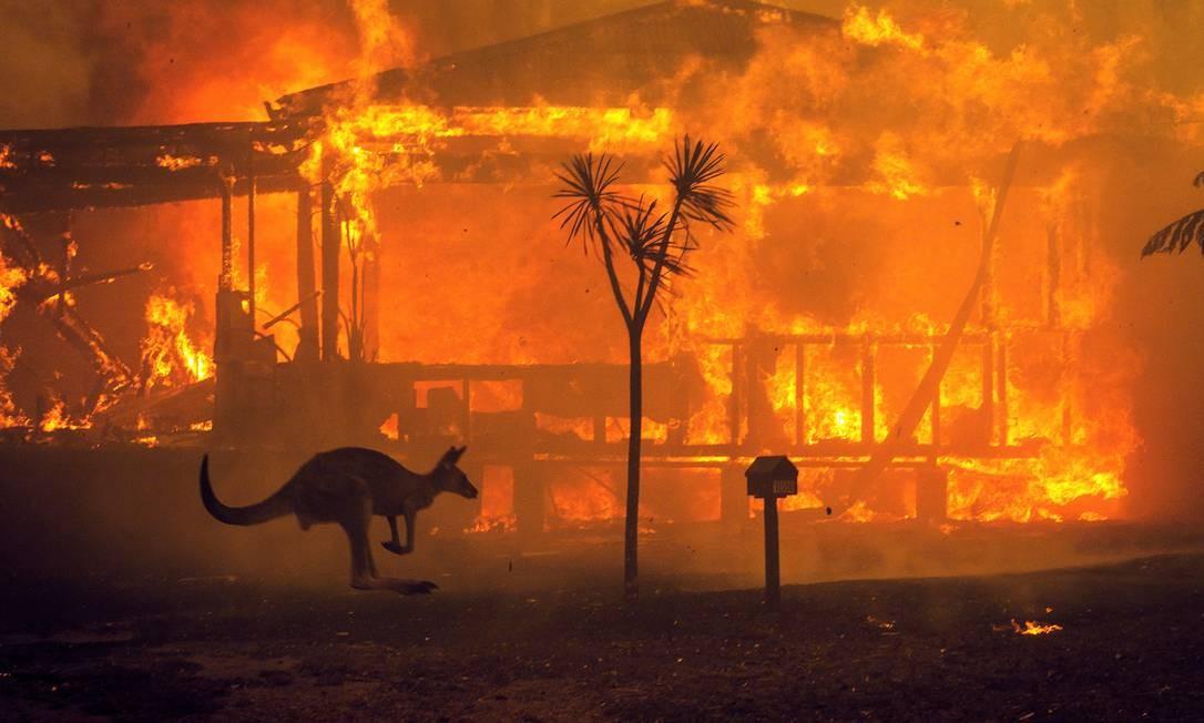 Canguru passa foge de chamas, na Austrália. Meio bilhão de animais morreram desde início da crise, afirmam pesquisadores da Universidade de Sidney Foto: Matthew Abbott / The New York Times