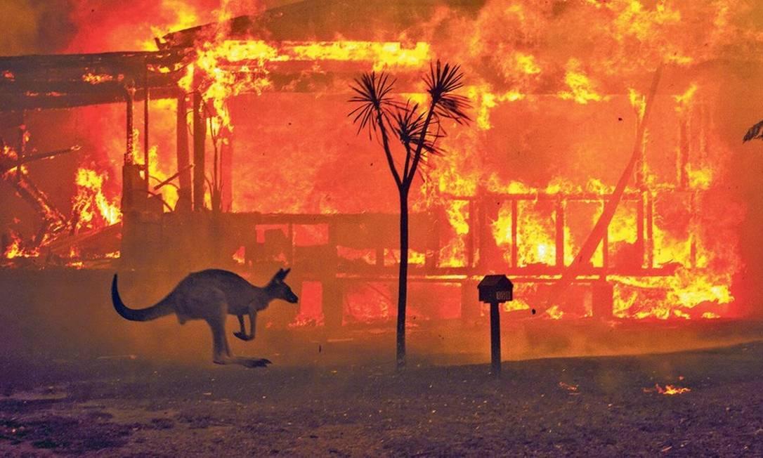 Canguru foge das chamas em Nova Gales do Sul: segundo a Universidade de Sydney, quase meio bilhão de animais morreram apenas no estado, estimativa considerada 'conservadora' Foto: Matthew Abbott/The New York Times/31-12-2019