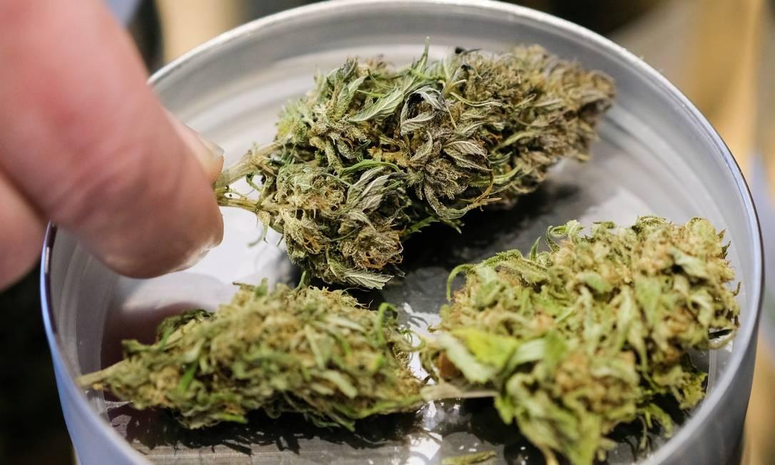 O cânhamo tem baixo teor de THC, uma substância que, em determinadas doses, causa euforia e é a base do consumo de cigarros e do tráfico internacional de drogas Foto: picture alliance / Getty Images