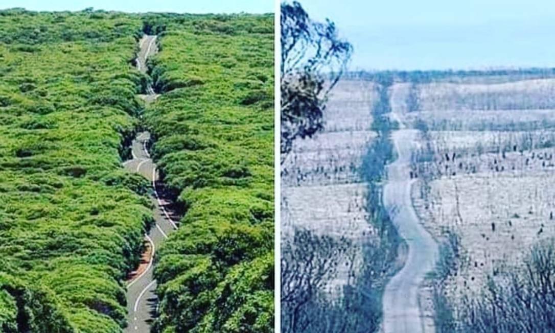 Antes e depois dos incêndios na Ilha dos Cangurus Foto: Reprodução