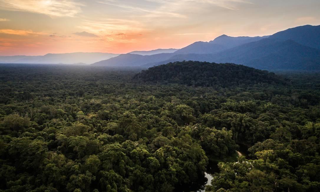 Biodiversidade da Mata Atlântica é comparável à da Amazônia Foto: FG Trade / Getty Images
