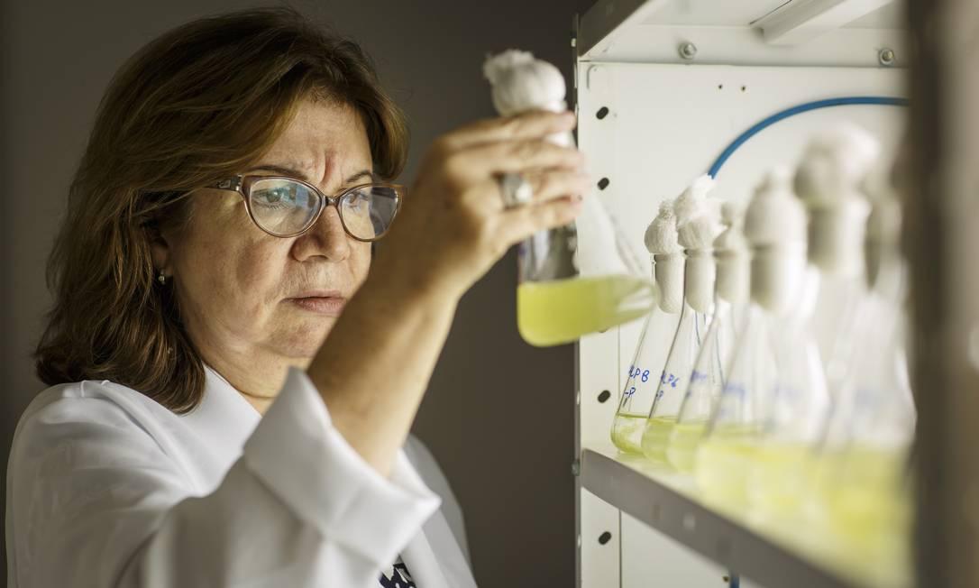 A professora da UFRJ Sandra Azevedo é uma das maiores especialistas do país em cianobactérias e efeitos de poluição da água na saúde Foto: Fernando Lemos / 28-4-2016 / Agência O Globo