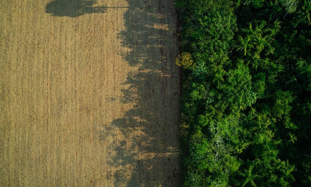 Área desmatada para pasto no Pará, em novembro de 2019 Foto: Fábio Nascimento / Agência O Globo