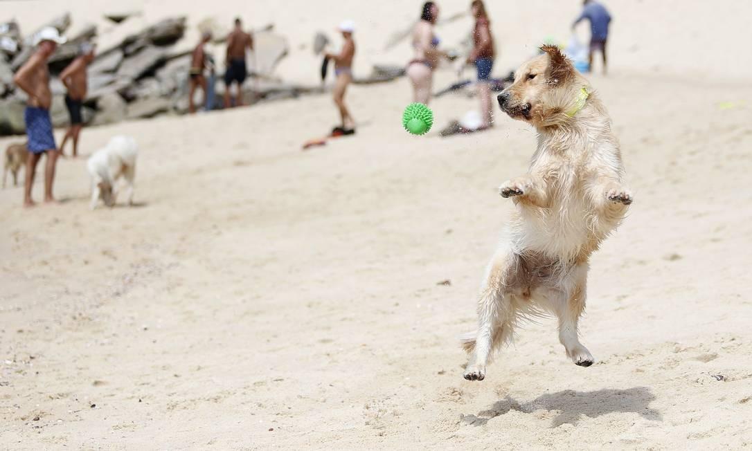Livre, leve e solto. Um cão brinca na areia da Praia do Leblon Foto: Márcio Alves / Agência O Globo