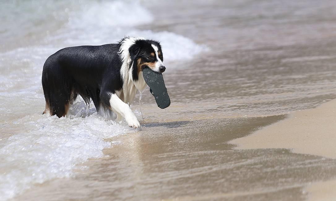 Border collie se diverte buscando sandalha atirada pelo dono no mar do Leblon Foto: Márcio Alves / Agência O Globo