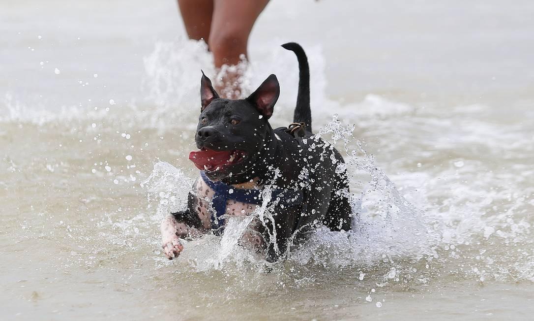 Cão retorna de mergulho na Praia do Leme Foto: Márcio Alves / Agência O Globo