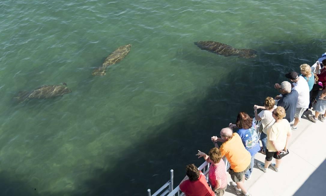 Visitantes observam peixes-bois no Manatee Lagoon Center, em Riviera Beach Foto: Robert Madrid / Divulgação